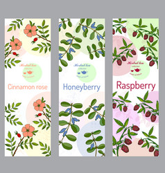 herbal tea collection cinnamon rose raspberry vector image