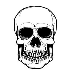 hand drawn human skull isolated on white vector image