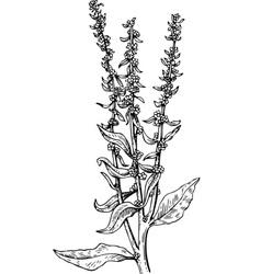 plant beta vector image