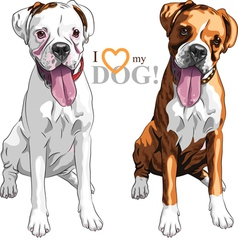 sketch two domestic dog Boxer breed vector image vector image