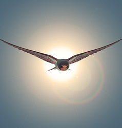 Free flying bird swallow at sun vector image