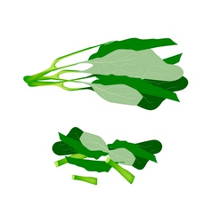 Fresh Green Chinese Broccoli on White Background vector image