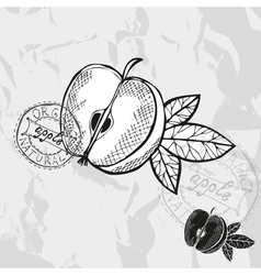 Hand drawn decorative apple vector