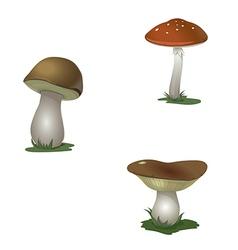 Mushroom set vector
