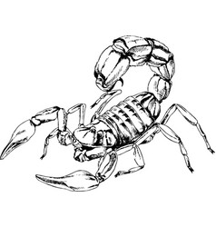 scorpio is drawn with ink tattoo vector image
