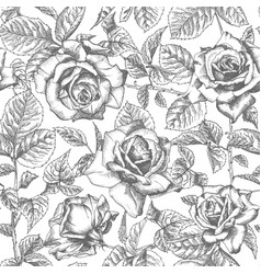 seamless pattern hand drawn sketch roses detailed vector image