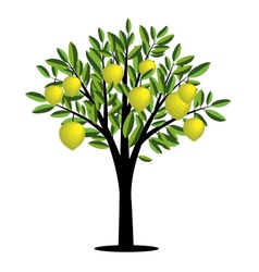 Lemon tree vector image vector image