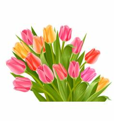 Bouquet of tulip flowers vector