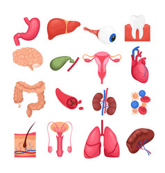 colorful set human organs vector image