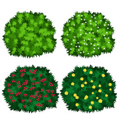green bushes in blossom isolated on white vector image