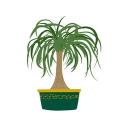 Hand drawn ponytail palm tree houseplant with dark vector