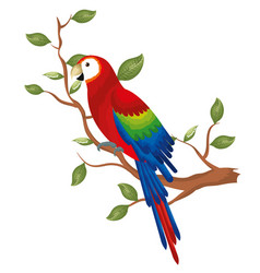 tropical parrot in branch tree vector image
