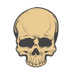 skull isolated on white background design vector image