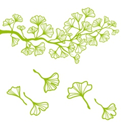 ginkgo branch with leaves vector image vector image