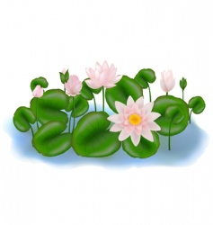lotus flowers vector image vector image