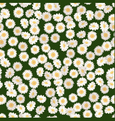 Chamomile seamless pattern daisies on green vector