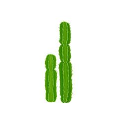 euphorbia cactuss plant on a vector image