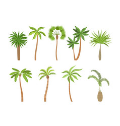 palm tree brazil hawaii exotic plants vector image