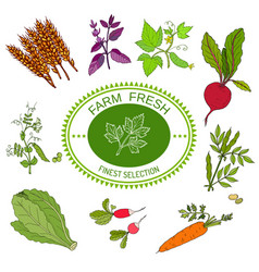Farmers food design logo and vegetables vector