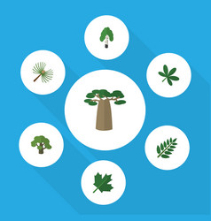 Flat icon nature set of baobab maple tree and vector