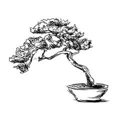 Hand sketch bonsai vector