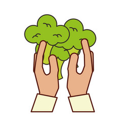hands holding broccoli vector image