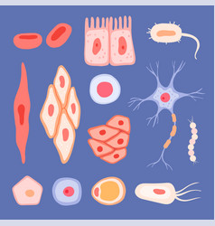 human cells biological structure blood scenes vector image