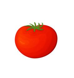 tomato fresh vegetable concept healthy vector image