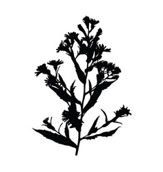 Black and white flowers royalty free vector image wild flower silhouette isolated on white vector image mightylinksfo