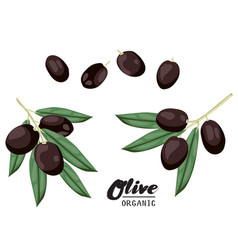 cartoon black olives ripe green vegetable vector image vector image