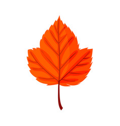 autumn leaf autumn red leaf isolated on a whit vector image