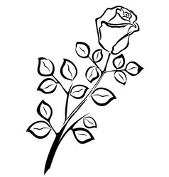 black outline of single rose flower vector image