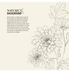 branch chrysanthemum vector image