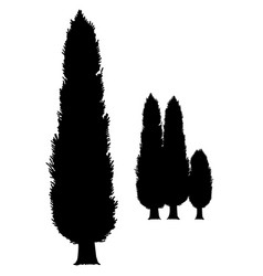 Cypress silhouette simple cypress vector