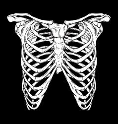 human ribcage hand drawn line art print vector image