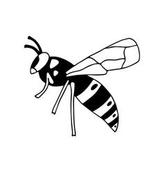 Wasp-03 vector