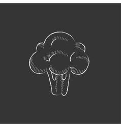 Broccoli Drawn in chalk icon vector