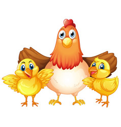 Chicken and chick character vector