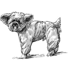 Lapdog in overalls vector