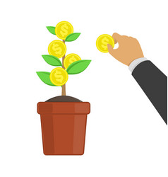 money tree growing vector image