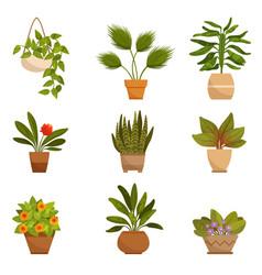 set home decorative plants vector image
