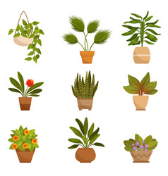 set of home decorative plants vector image