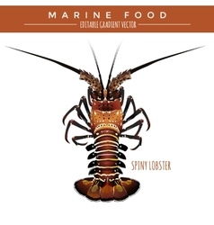 Spiny Lobster Marine Food vector