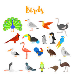 flat style set birds vector image
