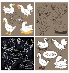 Poultry on dark background vector image