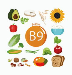 Vitamin b9 folate vector