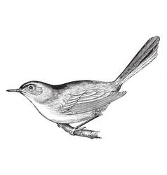 Blue gray gnat catcher vintage vector
