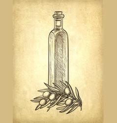 bottle olive oil and olive branch vector image