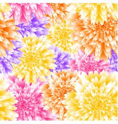 chrysanthemum floral background vector image