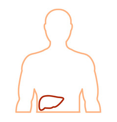 contour of the human body with the liver vector image